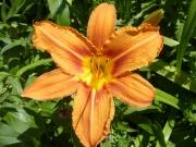 2010-07-11_14-23-01_037altaussee