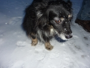 2010-12-25 16-12-46_052Christtag